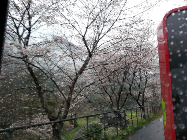 nishikigawa_013.jpg
