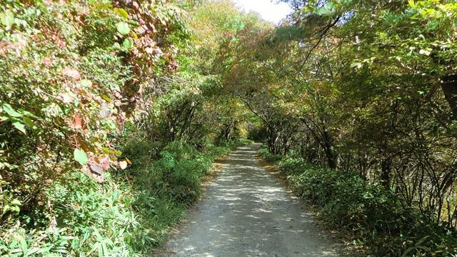 八ヶ岳ふれあいセンターの周辺の遊歩道