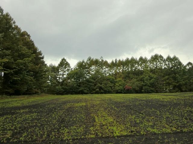 「スター☆パーティ」の隣に広がる畑