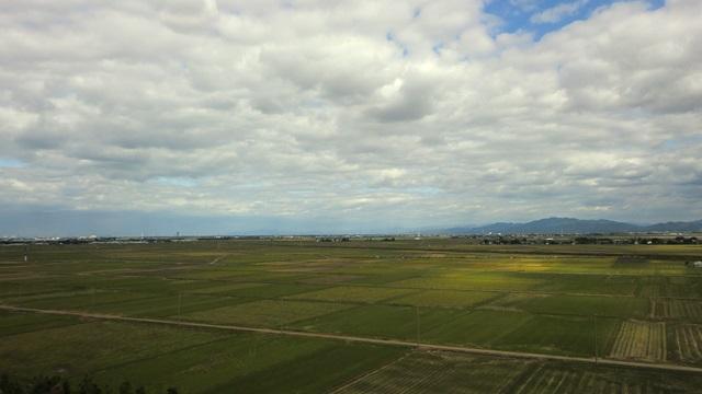 新潟平野に広がる水田
