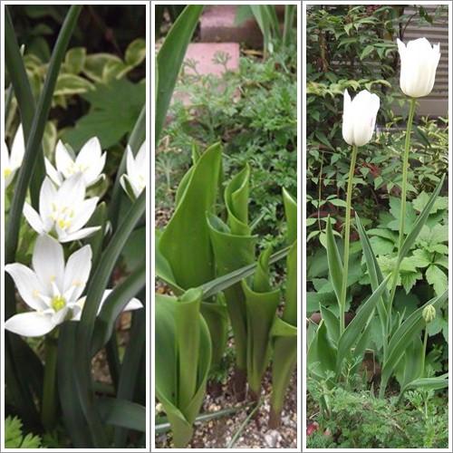 20140421ハナミズキ花壇の花