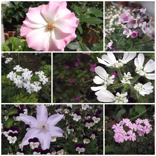 20140524庭の花