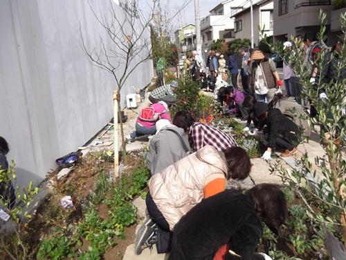 20141109植栽④