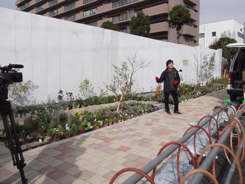 20141109植栽