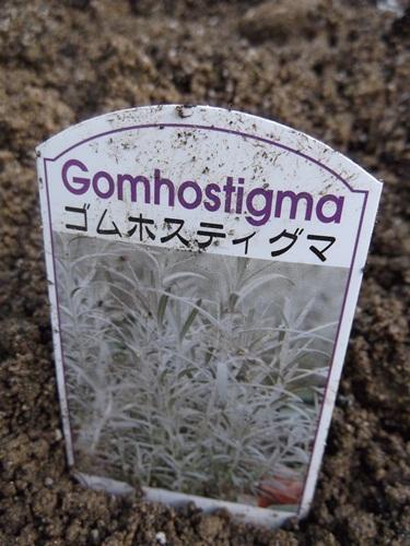 20141109ゴムホスティグマ