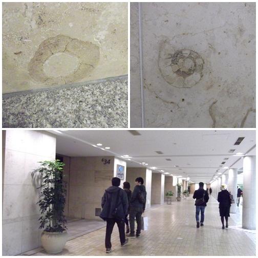 20141116化石