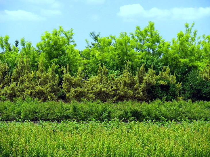 見沼の緑1
