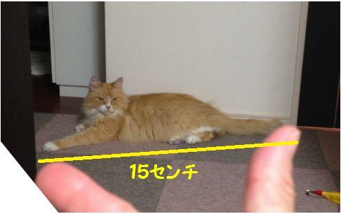 全長15センチ