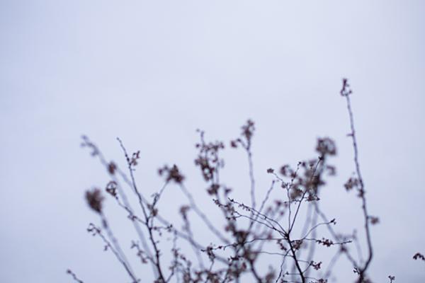 東山植物園-13