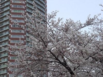 2014春