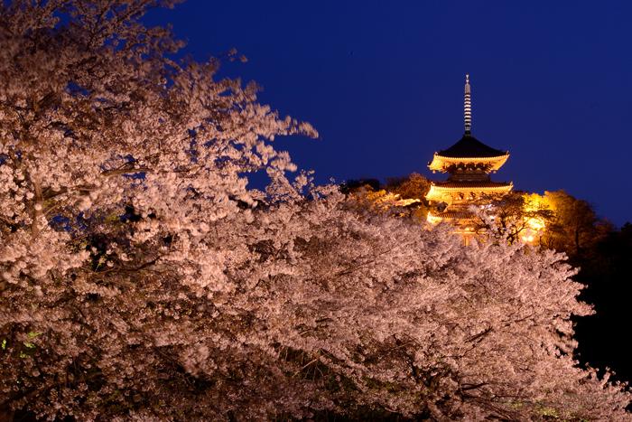 三溪園 夜桜