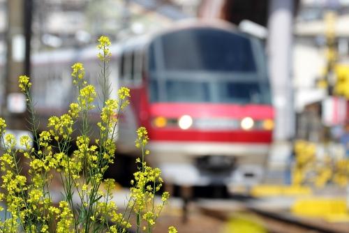 名鉄呼続駅・菜の花と名鉄特急