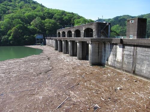 木曽川川上り 丸山ダム流木