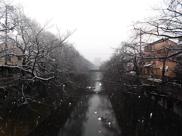 石神井川507