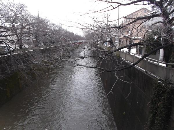 石神井川513