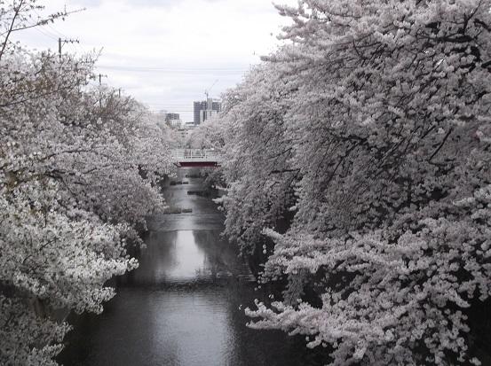桜1025