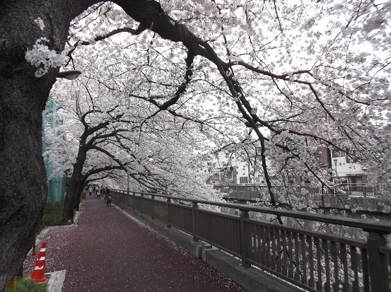 桜1041