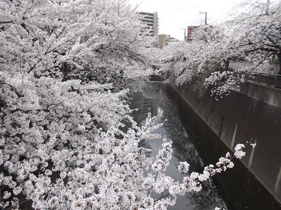 桜1027