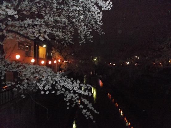 桜1129