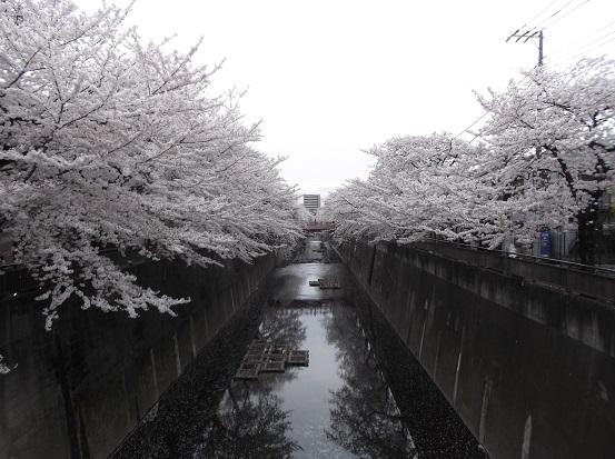 桜1112