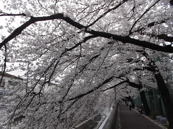桜1038