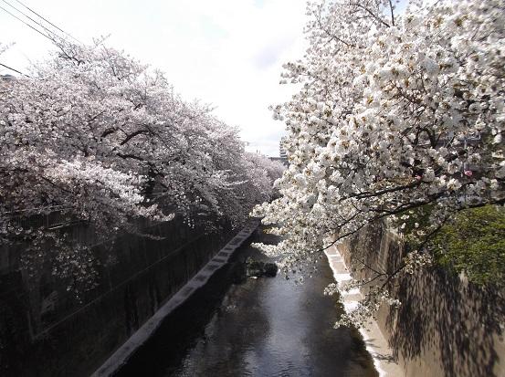 桜1232