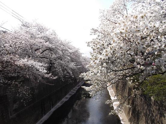 桜1230