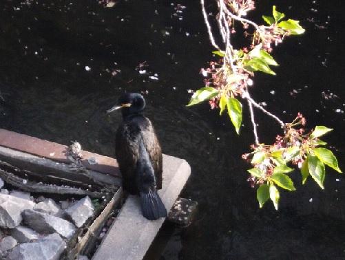 鳥1454