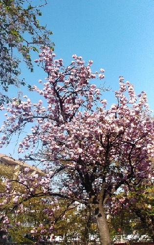 桜1387