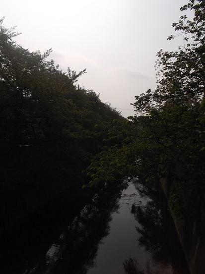 石神井川1466