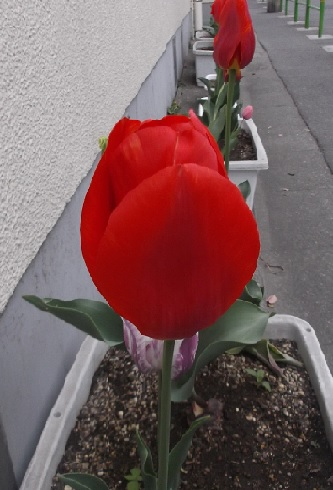 花1572