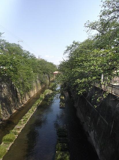 石神井川1585