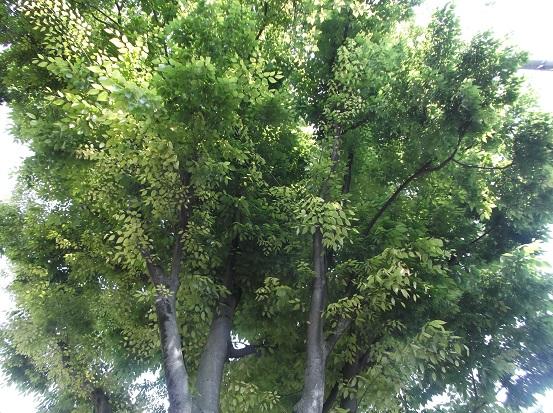 樹1625