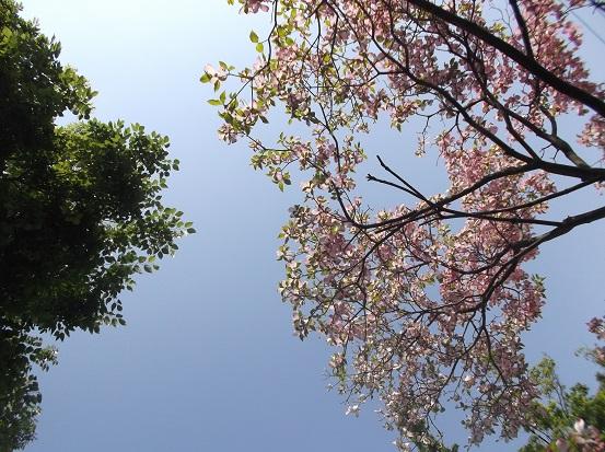 樹1620
