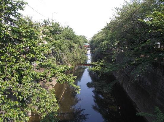 石神井川1656