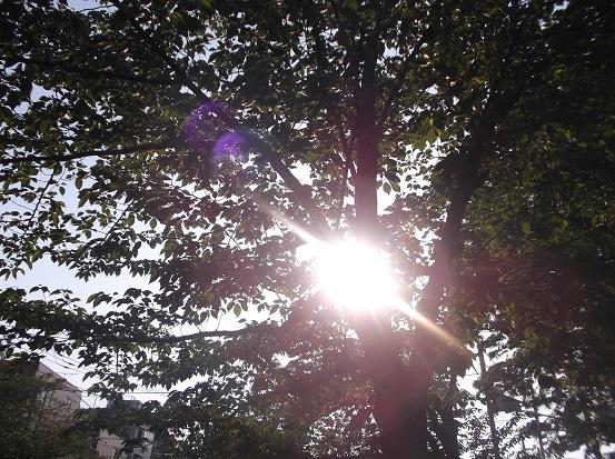 樹1663