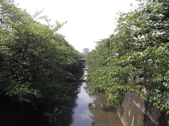 石神井川1718