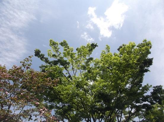 樹1702