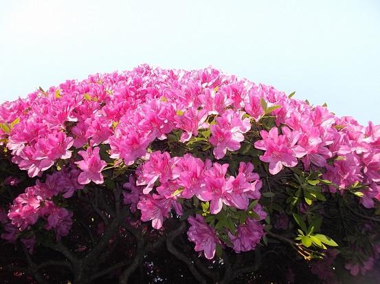 花1804