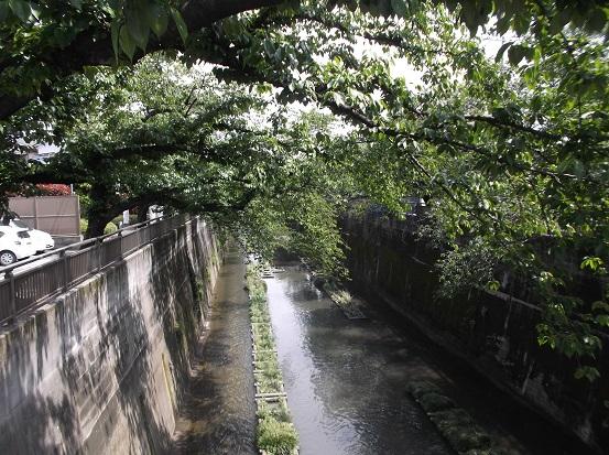 石神井川1717