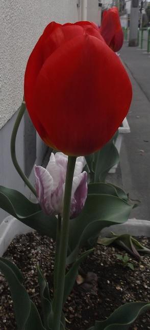 花1573