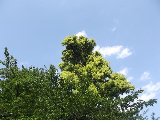 樹1762