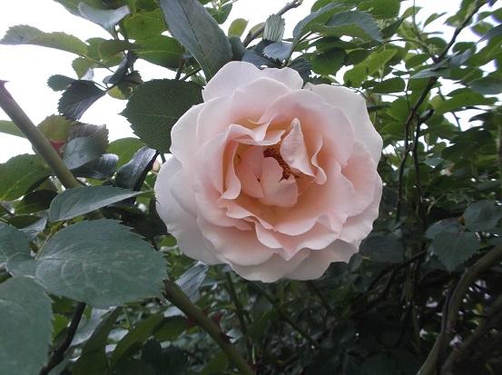 花1835
