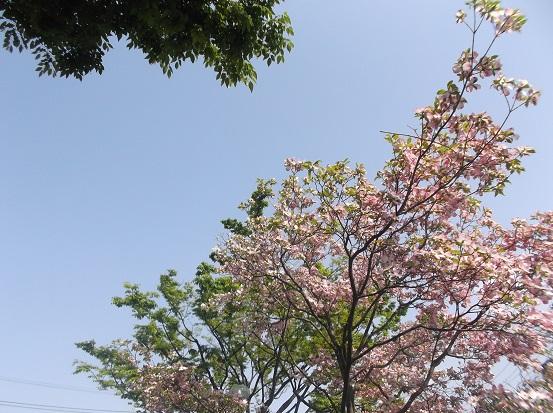 樹1628
