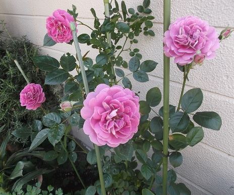 花1825