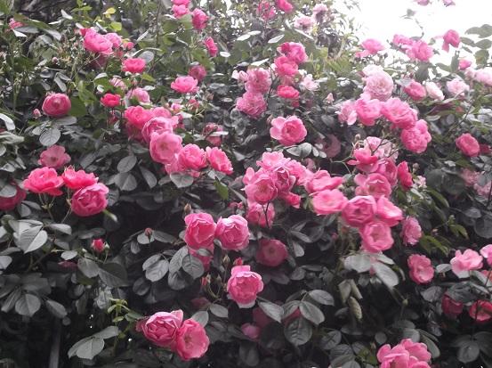 花1868