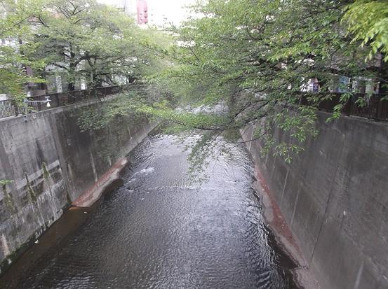 石神井川1544