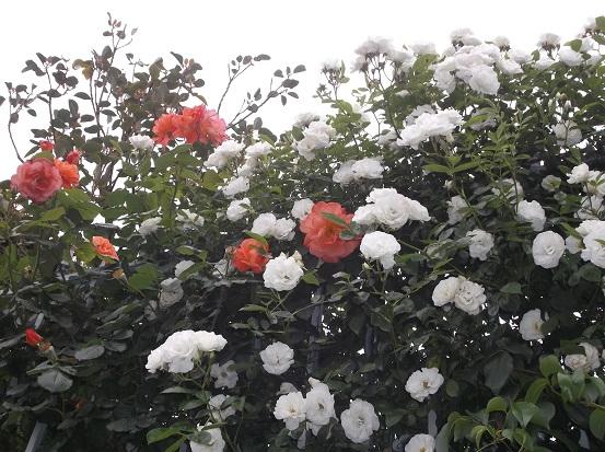 花1872