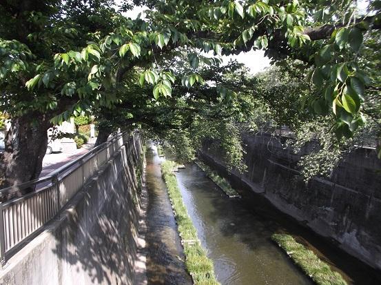 石神井川1806