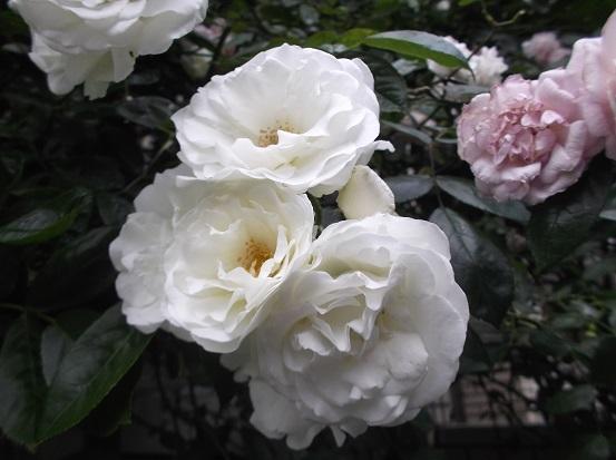 花1888